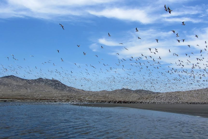 A visit to the coastal wetlands is perfect on a day trip from Lima for birdwatchers