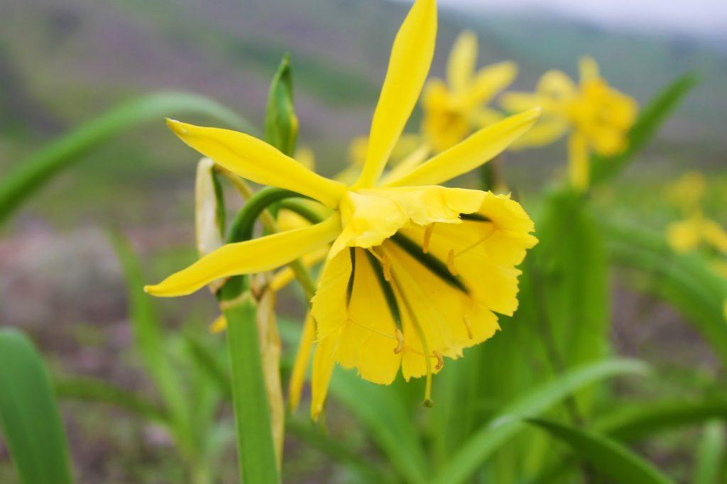 Unique biodiversity in the hills near Lima